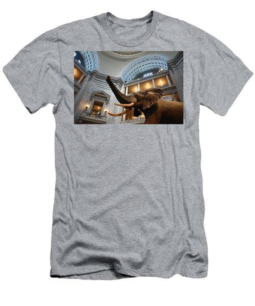 Bull Elephant In Natural History Rotunda Men's T-Shirt (Athletic Fit)