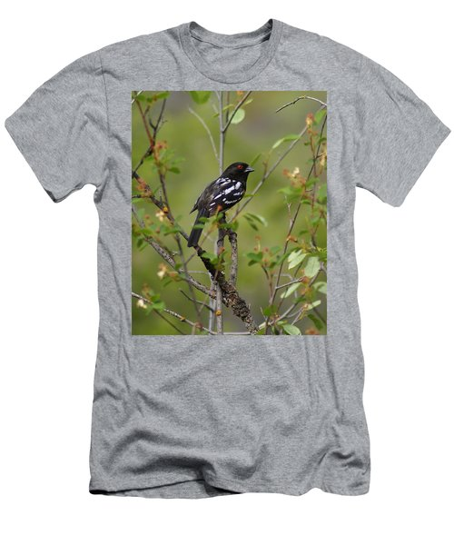 Spotted Towhee Men's T-Shirt (Athletic Fit)