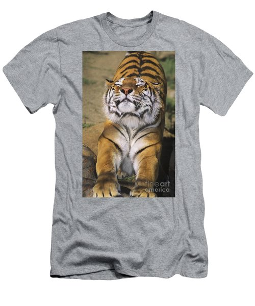 A Tough Day Siberian Tiger Endangered Species Wildlife Rescue Men's T-Shirt (Athletic Fit)