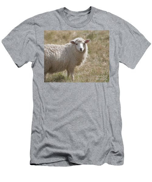 Adorable Sheep Men's T-Shirt (Slim Fit)