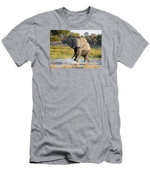 African Elephant Mock-charging Men's T-Shirt (Athletic Fit)