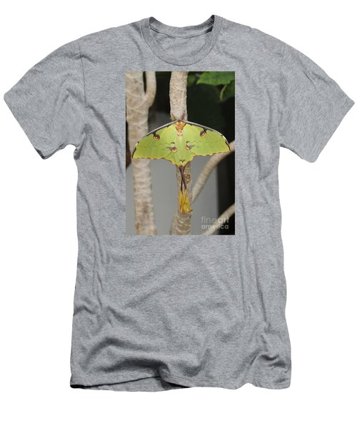 African Moon Moth Men's T-Shirt (Athletic Fit)