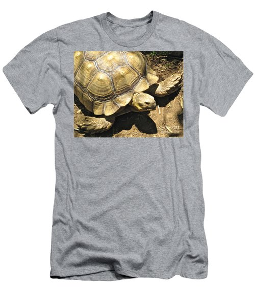 African Spurred Tortoise Men's T-Shirt (Slim Fit) by CML Brown