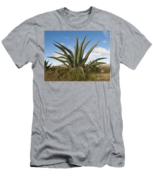 Agave Plant Men's T-Shirt (Athletic Fit)