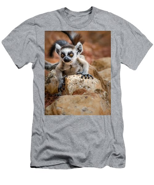 Baby Ringtail Lemur Men's T-Shirt (Athletic Fit)
