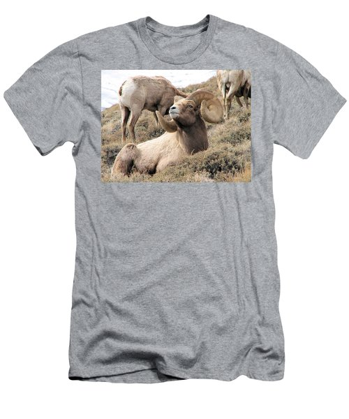 Big Bighorn Ram Men's T-Shirt (Athletic Fit)