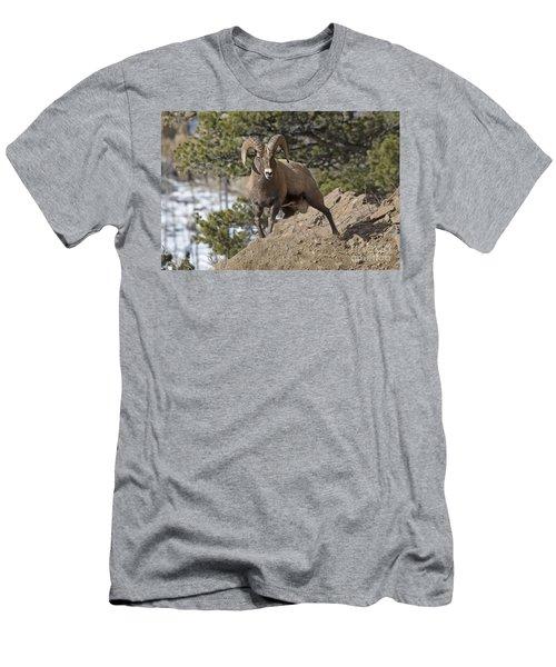 Big Horn Ram Men's T-Shirt (Athletic Fit)