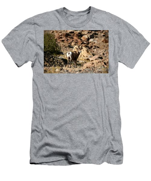 Bighorn Stare Men's T-Shirt (Athletic Fit)