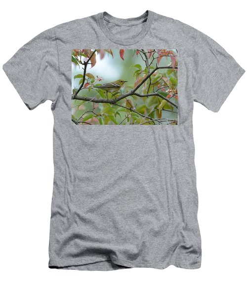 Blackpoll Warbler In The Fall Men's T-Shirt (Athletic Fit)