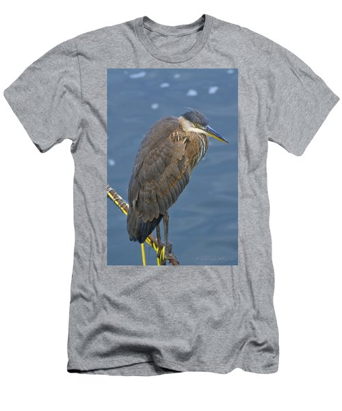 Blue Herron Men's T-Shirt (Athletic Fit)