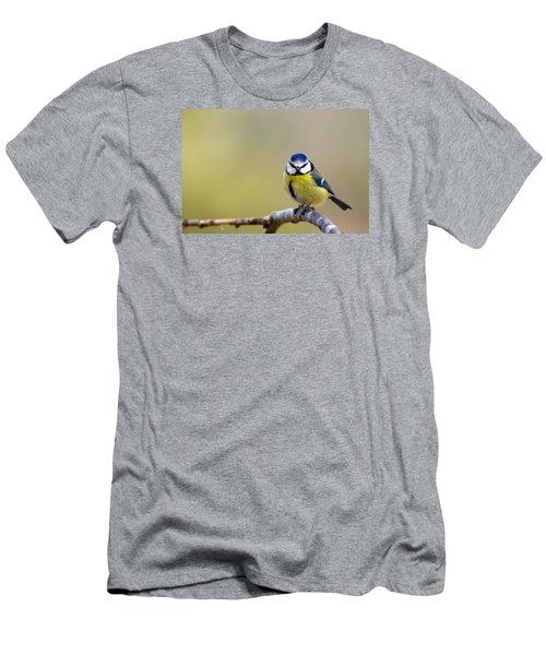 Blue Tit Men's T-Shirt (Athletic Fit)