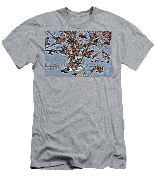 Bohemian Waxwing Feast Men's T-Shirt (Athletic Fit)