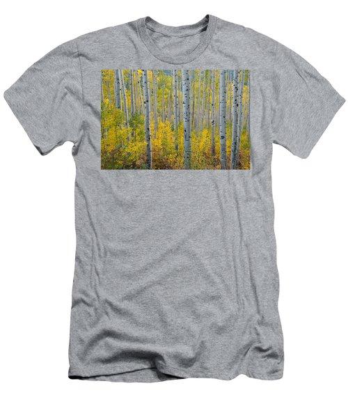 Brilliant Colors Of The Autumn Aspen Forest Men's T-Shirt (Athletic Fit)