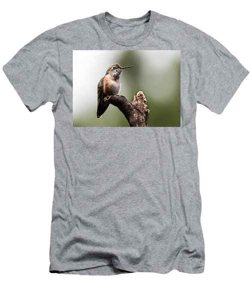 Broad-tailed Hummingbird Sit  Men's T-Shirt (Athletic Fit)