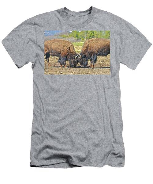 Buffaloes At Play Men's T-Shirt (Athletic Fit)