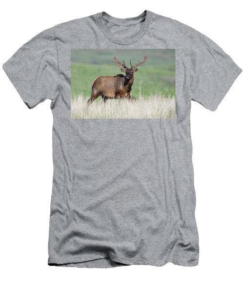 Men's T-Shirt (Slim Fit) featuring the photograph Bull Elk In Velvet by Jack Bell