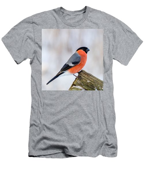Bullfinch On The Edge Men's T-Shirt (Athletic Fit)