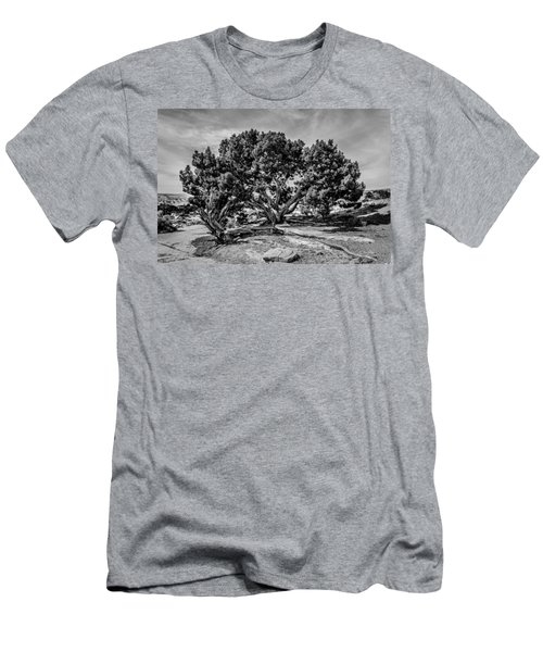 Bw Limber Pine Men's T-Shirt (Athletic Fit)