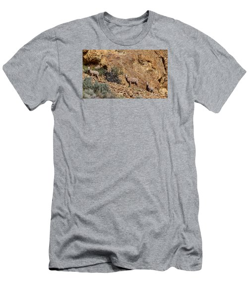 California Bighorn Sheep Men's T-Shirt (Athletic Fit)