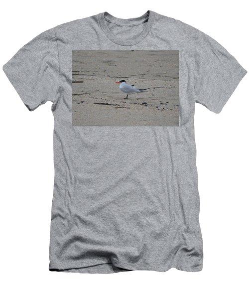 Men's T-Shirt (Slim Fit) featuring the photograph Caspian Tern by James Petersen