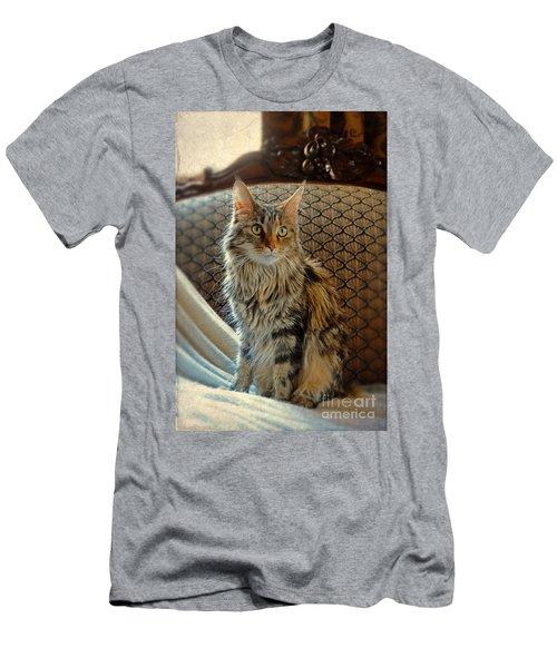 Cat On Victorian Sofa Men's T-Shirt (Athletic Fit)