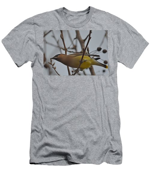Cedar Waxwing Feasting In Foggy Cherry Tree Men's T-Shirt (Slim Fit) by Jeff at JSJ Photography