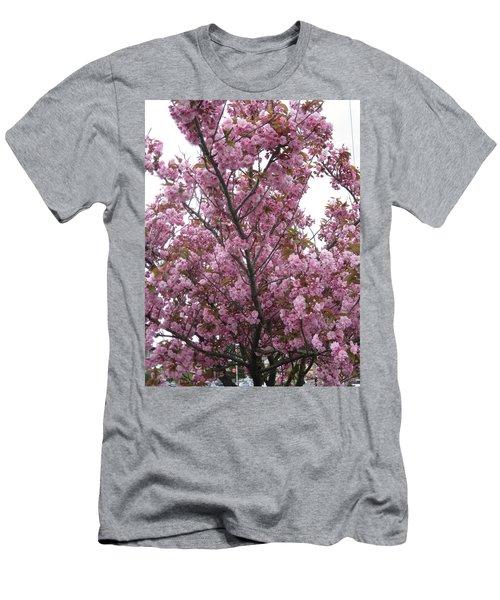 Cherry Blossoms 2 Men's T-Shirt (Athletic Fit)