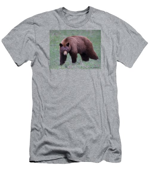 Cinnamon Black Bear Men's T-Shirt (Slim Fit) by CR  Courson