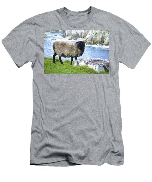 Clew Bay Sheep Men's T-Shirt (Athletic Fit)