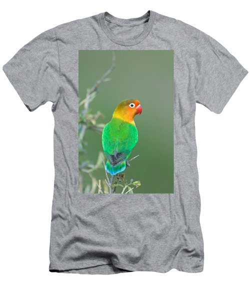 Close-up Of A Fischers Lovebird Men's T-Shirt (Athletic Fit)