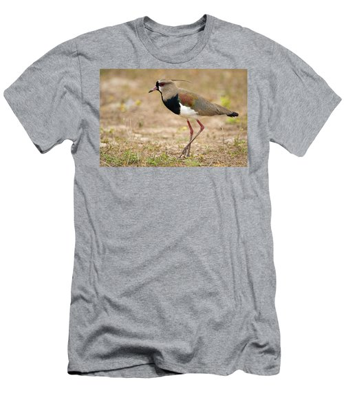 Close-up Of A Southern Lapwing Vanellus Men's T-Shirt (Slim Fit) by Panoramic Images