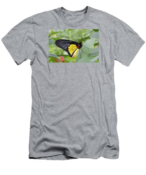 Men's T-Shirt (Slim Fit) featuring the photograph Common Birdwing Butterfly by Judy Whitton