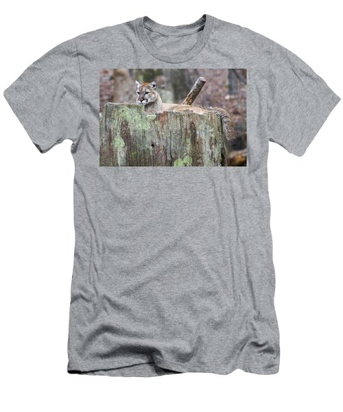 Cougar On A Stump Men's T-Shirt (Slim Fit) by Chris Flees