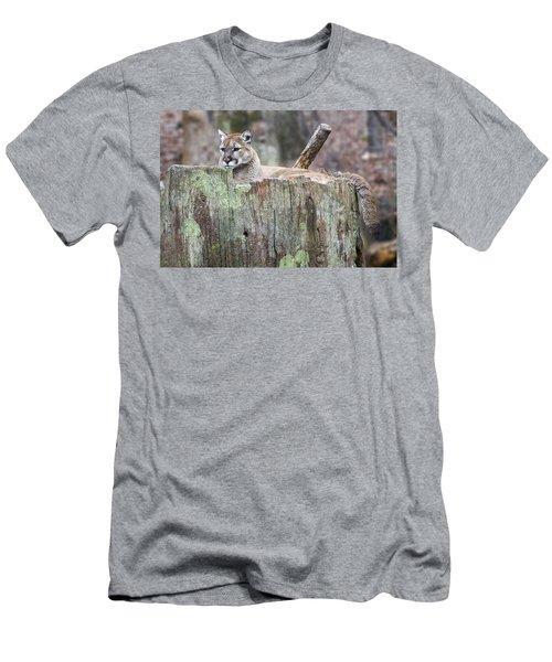 Cougar On A Stump Men's T-Shirt (Athletic Fit)