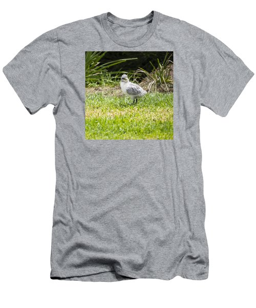 Crested Tern Chick - Montague Island - Australia Men's T-Shirt (Athletic Fit)