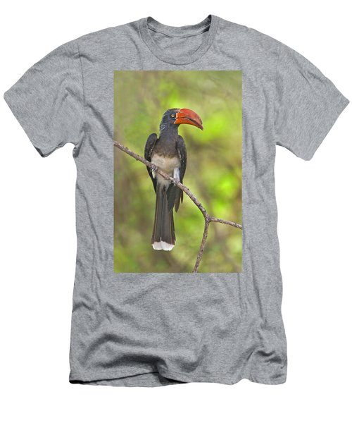 Crowned Hornbill Perching On A Branch Men's T-Shirt (Athletic Fit)
