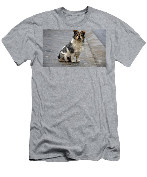 Cute Dog Sits On Pavement And Stares At Camera Men's T-Shirt (Athletic Fit)