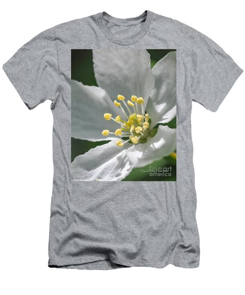 Delcate Widflower With Beautiful Stamen Men's T-Shirt (Athletic Fit)