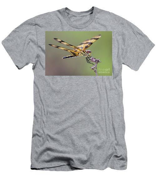 Men's T-Shirt (Slim Fit) featuring the photograph The Halloween Pennant Dragonfly by Olga Hamilton