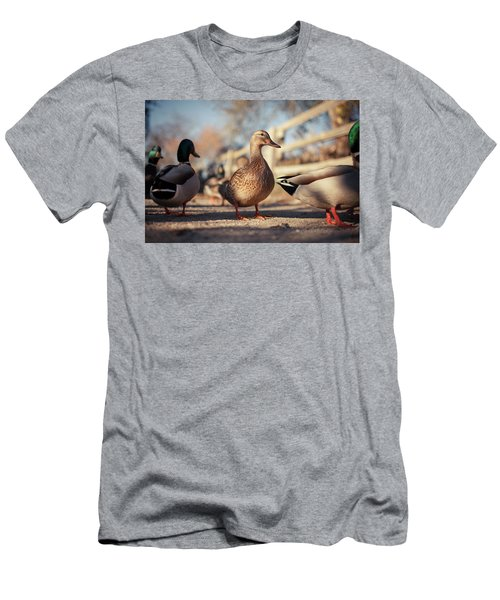 Ducks On The Ground Men's T-Shirt (Athletic Fit)