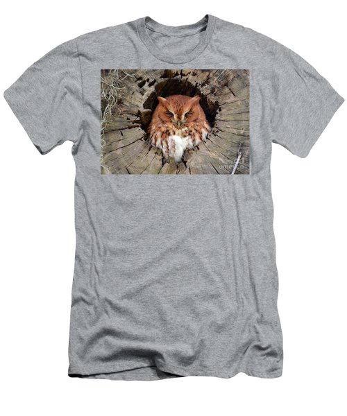 Eastern Screech Owl Men's T-Shirt (Athletic Fit)