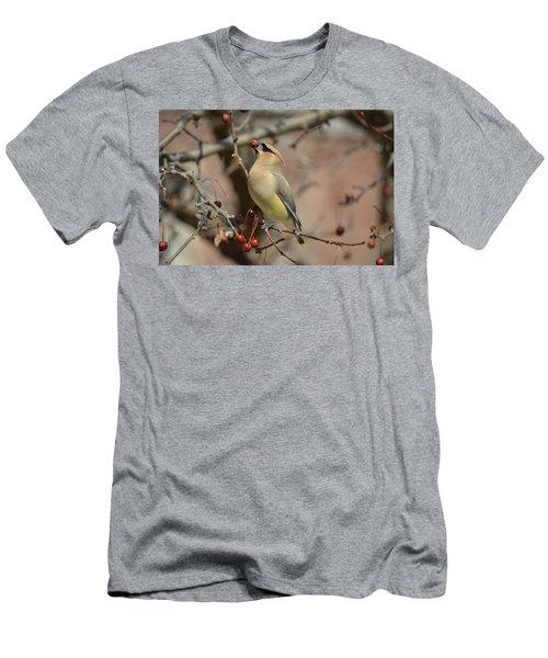 Cedar Waxwing In Winter Men's T-Shirt (Slim Fit) by James Petersen