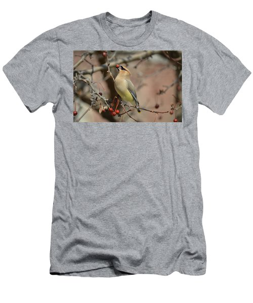 Cedar Waxwing In Winter Men's T-Shirt (Athletic Fit)