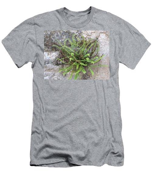 Fern Tendrils  Men's T-Shirt (Athletic Fit)