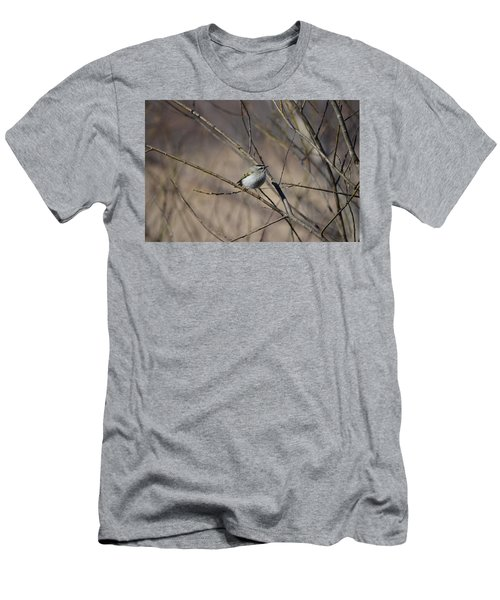 Golden-crowned Kinglet Men's T-Shirt (Athletic Fit)