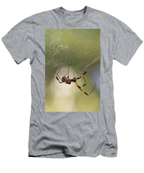 Golden-silk Spider Men's T-Shirt (Athletic Fit)