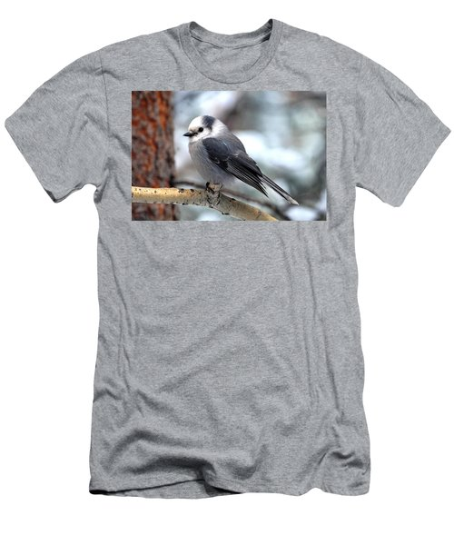 Gray Jay On Aspen Men's T-Shirt (Athletic Fit)