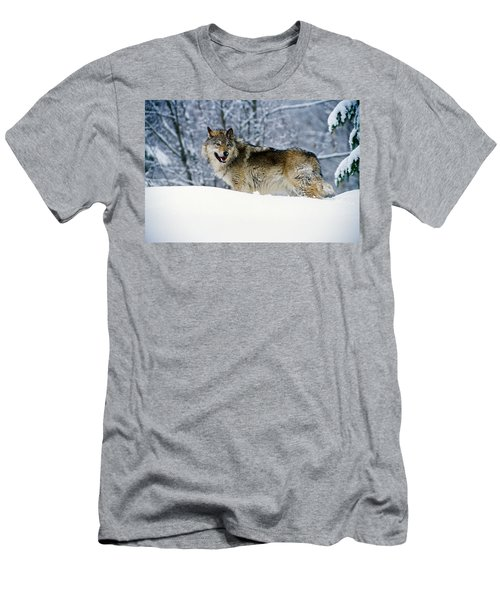 Gray Wolf In Snow, Montana, Usa Men's T-Shirt (Athletic Fit)