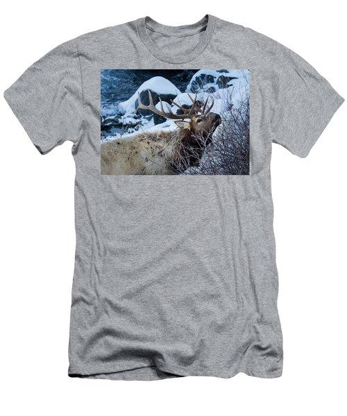 Grazing Elk Men's T-Shirt (Slim Fit)