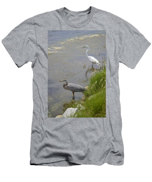 Great Blue And White Egrets Men's T-Shirt (Athletic Fit)